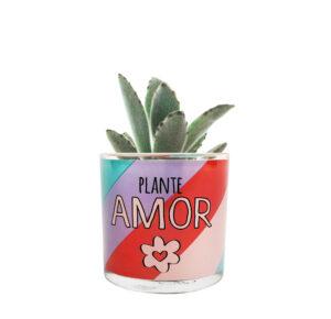CACHEPOT PLANTE AMOR