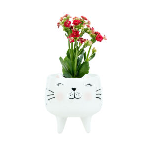 MINI CACHEPOT GATO BLUSH